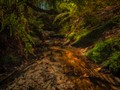 Moss and Ferns In Creek