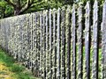 Hairy Fence