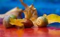 acorns-DSC09802-LR