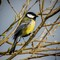 VogelsVoorjaar2016a_022