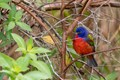 This little fella is a Painted Bunting and is a winter resident here in the Sunshine State. Taken at Circle B Bar Reserve in Lakeland, Florida.