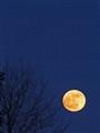 Moon rise i vintertime