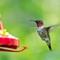 Birds2018-47sm: OLYMPUS DIGITAL CAMERA