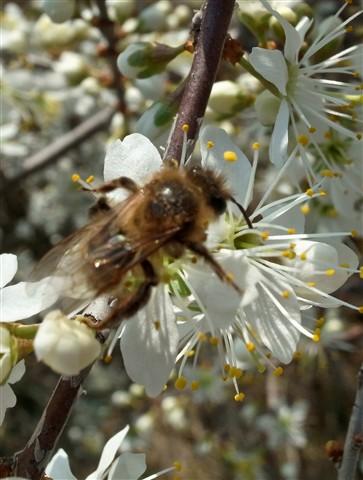 abeja y arañones