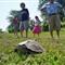 turtle-b