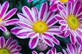 Flower-8541
