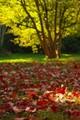 Gorgeous Autumn Sunshine