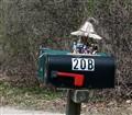 A Rhode Island Mailbox