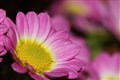 flower122