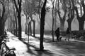 Winter in Madrid, Paseo de Rosales