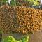 lots o bees