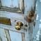 Door & brass Knob