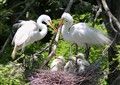Great Egret Family Home