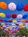 Floria Umbrellas