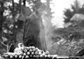Making Makai(raw corn).