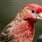 2011-06-20 birds7 034-Edit
