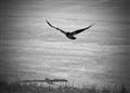 Flying Away
