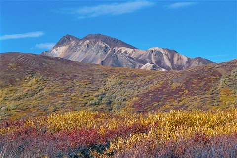Mountain Tundra - Denali National Park, Alaska 9/11/2001