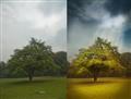 Pixie tree