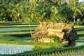 Cabin in rice fields at Bali
