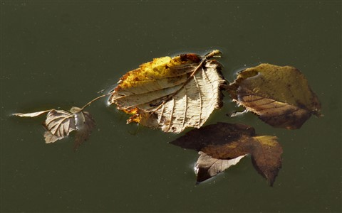 leaves in river