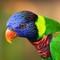 Colourful Bird - Singapore