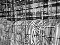 Barbed wires of death