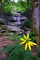 Rainbow Falls, Great Smoky Mountains National Park