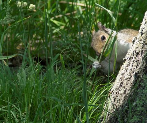 2012-05-13 ConsGarden Squirrel