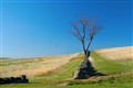 brandywine tree