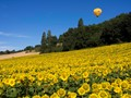 Balloon over Sunflowers