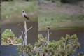 Bird telling me off