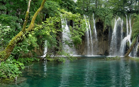 Plitvice - falls and tree