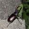 summer-2011-06-18-IMG_5019-Bug