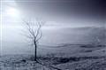 lone tree near Malham