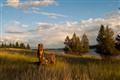 Postcard Landscape