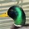 Duck-sx40