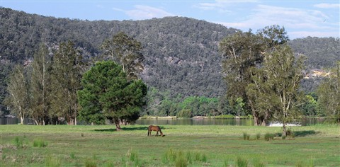 Horse by the River (NSW)