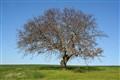 O1_Dry Tree