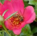 Nestled in for the nectar