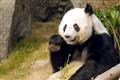 Big Panda, China