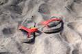Abandoned Flip Flops