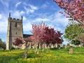 Blossom in a Worcestersire Churchyard, Bishampton