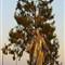 Our Lady of Peace Shrine Roman Catholic Church Santa Clara CA at sunrise