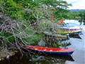 Fishing Boats in River Near Negril , Jamaica