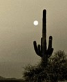 Full moon (not photoshopped in) rising behind a majestic 140-year-old Saguaro cactus in the Sonoran desert, southern Arizona.