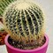 Trnoviti  kaktus