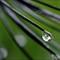 CMG19120-Druppels-ISO1600_filtered-v1-2016-web