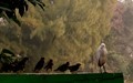 DPR,Challenge,Big year -birds,Salt lake Park,Kokata,W.B.India.-n