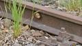 Rail_42